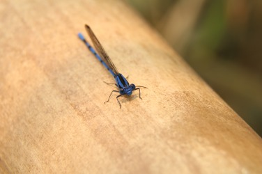 Azul en vida
